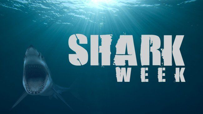 Shark Week 2014: starts tomorrow :))) if you know me then you will know that I freaking love sharks.