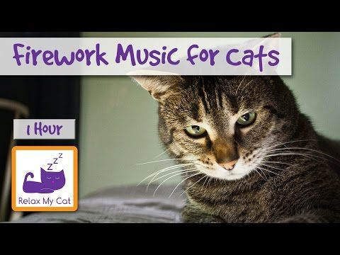 Sleep Music for Cats and Kittens! Soft Keyboards and Bell Sounds to Soothe Cats and Help Them Sleep! - YouTube
