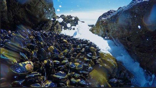 Material Inspired By #Saltwater #Mussels Could Lead to Self-Healing Plastics  The new #polymer: A #plastic that mimics both the #suction and self-healing properties of saltwater mussels. By: #AlexandriaAddesso READ MORE ON LINK IN BIO #Anthropology #Biology #Computerscience #Health #Philosophy #Physics #Psychology #Neuroscience #newmindjournal #blog #news #health #journal #knowledge #science http://quotags.net/ipost/1647623487030247998/?code=BbdiNT8B0I-