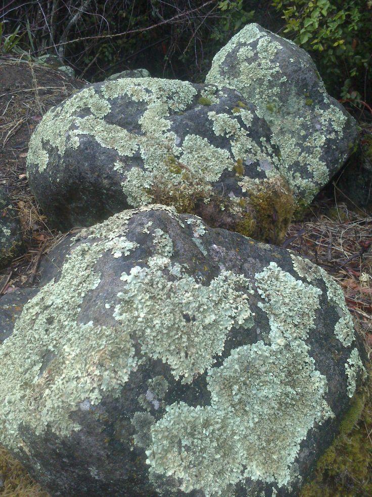 Líquenes en las rocas
