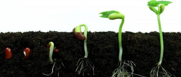 Germinating your first cannabis seeds We have developed this super easy Beginners Guide to Growing Cannabis to use as a base, a tool to help you thorough...