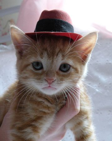 kitten in a hat! Uh oh! We need another kitten so we can put tiny hats on it and take pictures!!!