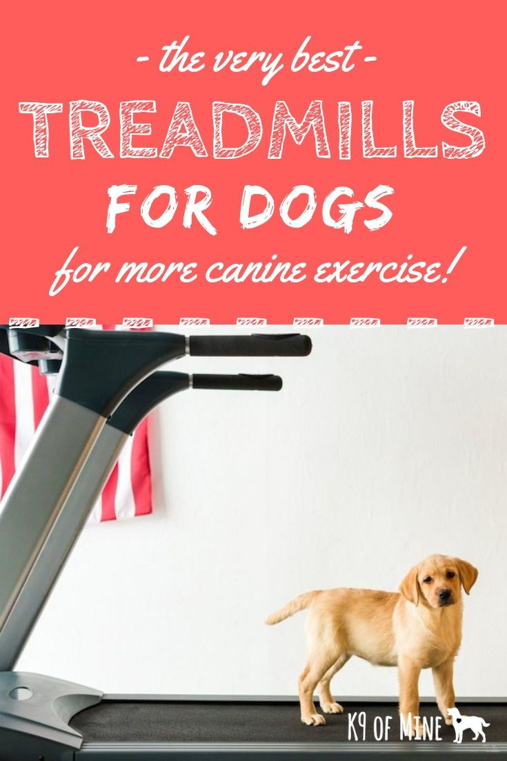 3 Best Dog Treadmills Buying Guide Indoor Exercise For Your