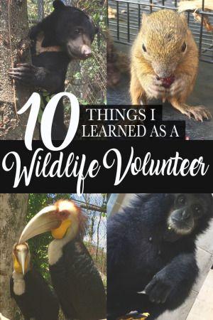10 Things I Learned as a Wildlife Volunteer, Bali, Indonesia   By Moore Misadventures