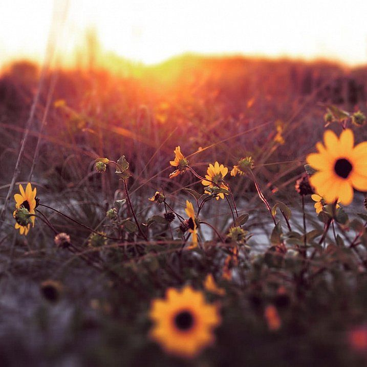 9 Tips for Adding a Warm Sun Flare to Your Image via @dpschool #phototips #photography