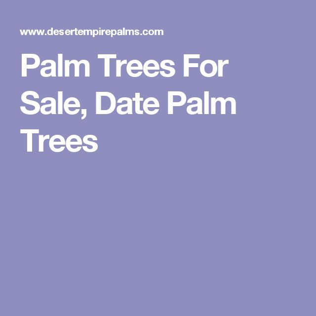 Palm Trees For Sale, Date Palm Trees