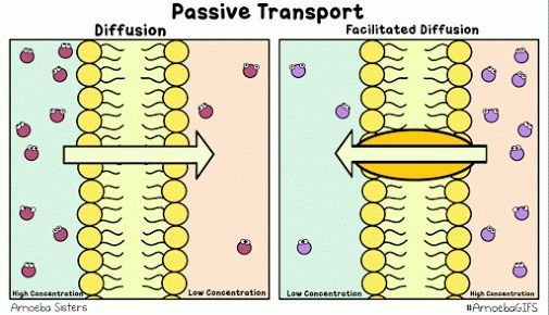 A GIF by the Amoeba Sisters demonstrating passive transport, including diffusion and facilitated diffusion!  www.amoebasisters.com/amoebagifs.html