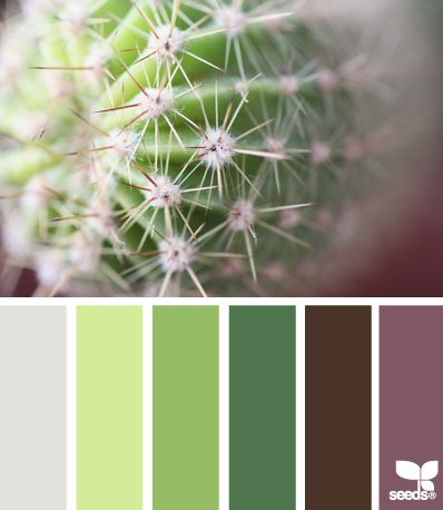 cactus hues