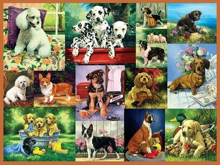 Best wallpaper pics