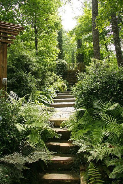 stepped path through a lush woodland garden at the...