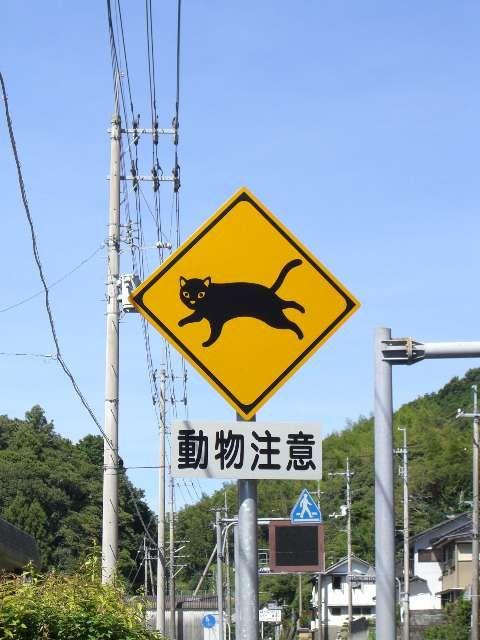 Prenez garde aux chats qui traversent ;)