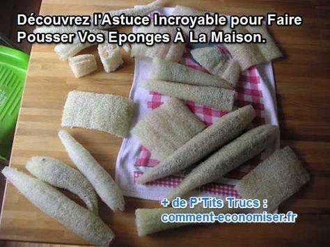 Saviez-vous qu'il est possible de faire pousser des éponges dans le jardin ? Oui, oui des éponges pour faire la vaisselle et laver le sol ! Découvrez l'astuce ici : http://www.comment-economiser.fr/voici-comment-je-fais-pousser-mes-eponges-dans-jardin.html?utm_content=buffer2b017&utm_medium=social&utm_source=pinterest.com&utm_campaign=buffer