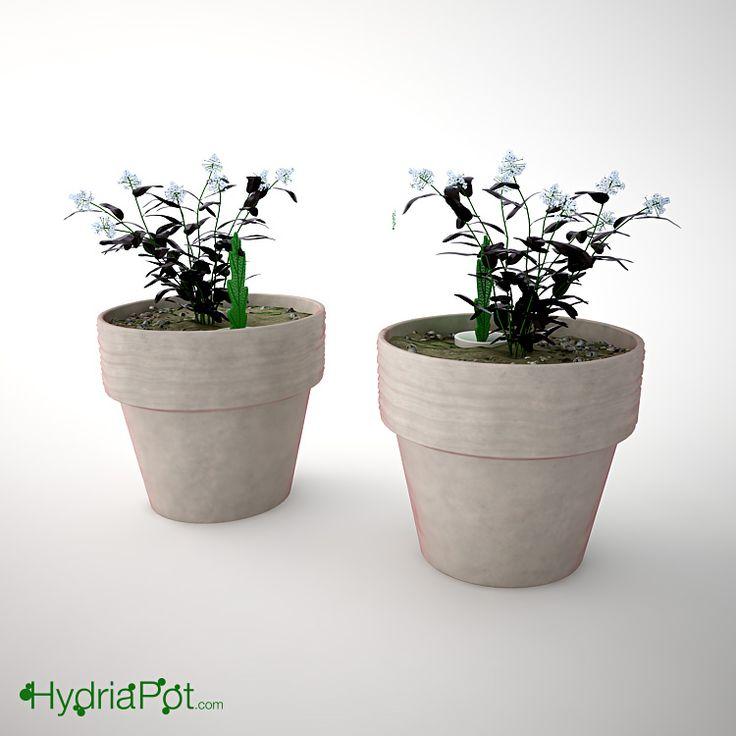 Hydria Pot on a vase