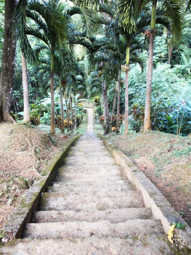 Steps to Pirates Bay, Tobago- Islands of Trinidad and Tobago actually tried to count when I was a little girl.