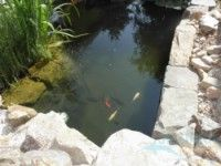 Zahradní jezírka inspirace, fotogalerie jezírek