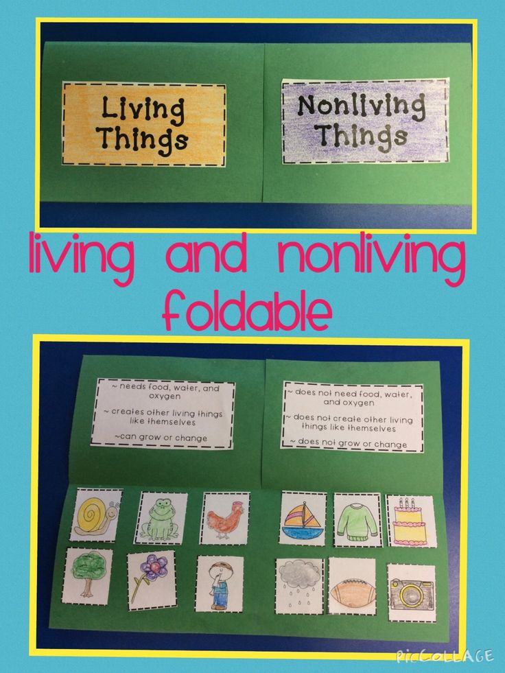 75 best grade 1 science living non living images on pinterest here is a fun hands on idea for teaching about living and nonliving things ccuart Image collections