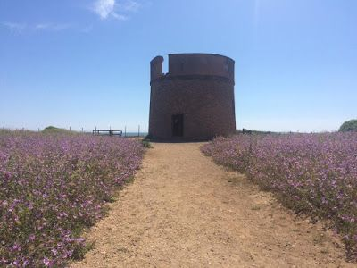 Tor Caldara (Anzio) un angolo di natura tra le seconda case del litorale romano. Flora, fauna e sorprese geologiche. Da non perdere