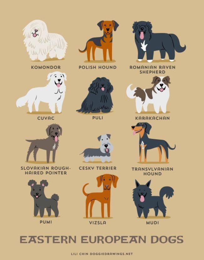 Galería: 21 Infografías que te enseñarán en que región nacen estas 200 razas de perros | NotiNerd