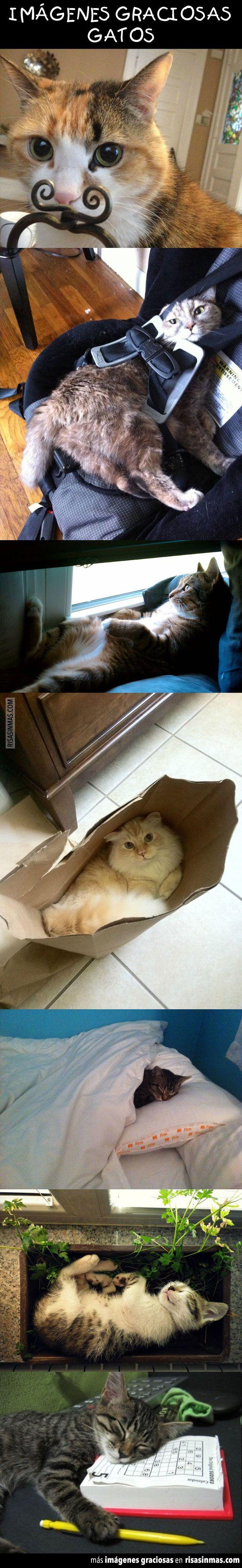 Imágenes graciosas: Gatos