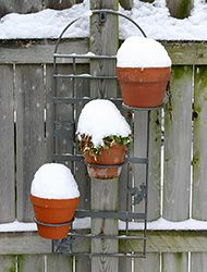 Overwintering Containers in Cold Winter Climates