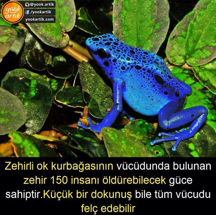Zehirli Ok