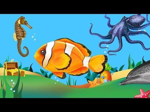 Kinderen Peuters en Kleuters leren de Zeedieren en Vissen herkennen - YouTube