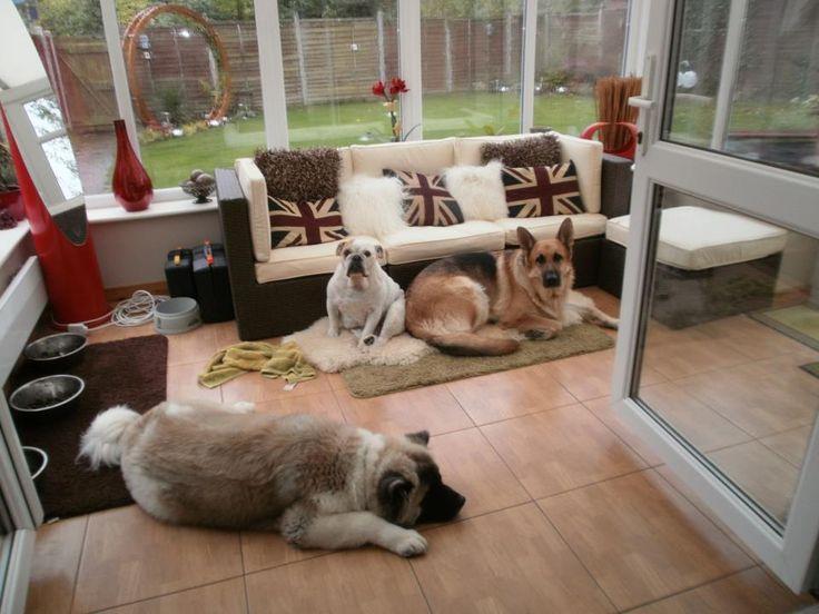 Dog Room Ideas 84 best dog room ideas images on pinterest   animals, crafts and dog