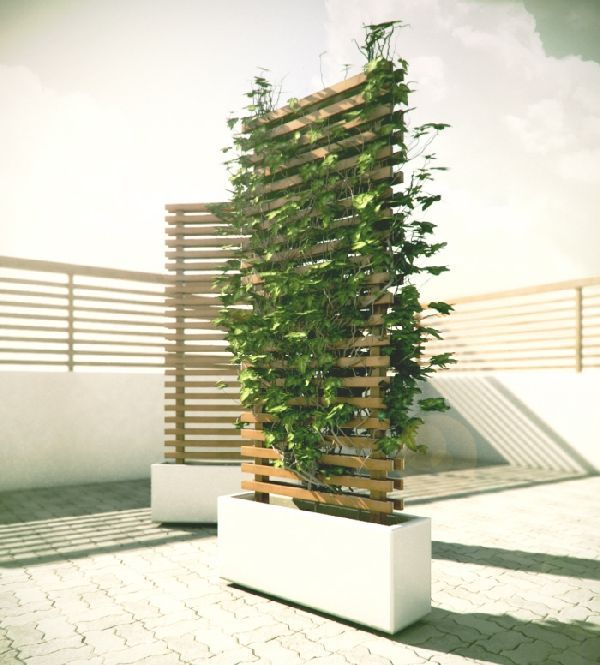 Best 25 privacy trellis ideas on pinterest privacy for Privacy wall planter