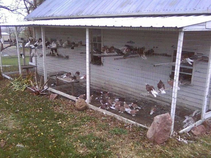 Pigeon coop pigeons and pigeon coops pinterest coops for Pigeon coop ideas