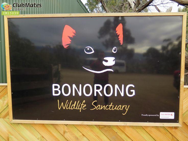 Clubmates @ Bonorong Wildlife Sanctuary