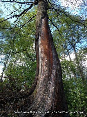 baffidigatto: Gli alberi della poetessa  Ana Blandiana
