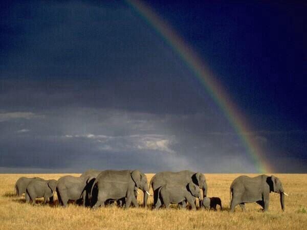 Parque Nacional Serengueti,Tanzania