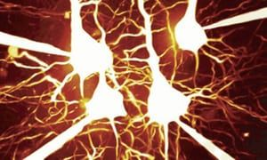 A network of pyramidal cells in the cerebral cortex. These interconnected brain cells form neural circuits which carry out the complex computations that will be explored by IBL researchers.