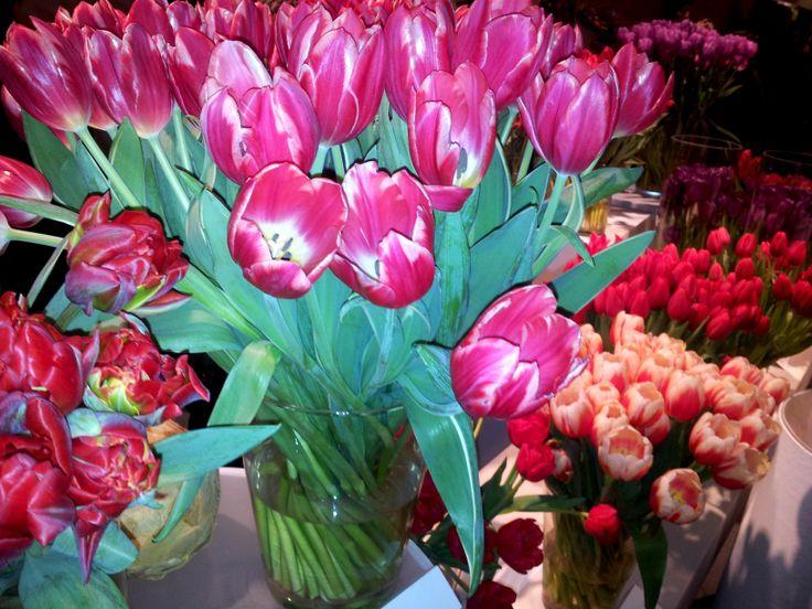 Temptation tulips