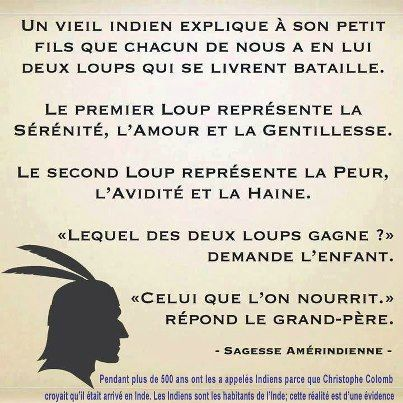 Deux loups - kassiopee