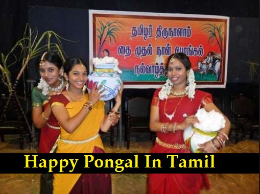 Happy Pongal In Tamil: Hello everyone welcome back to this article I will help you latest Pongal Images In Tamil, Pongal Wishes In Tamil, Pongal Greetings In Tamil, Pongal Messages In Tamil And much related to Pongal so guys and girls, please check out my article and if you like to feel free to share it.