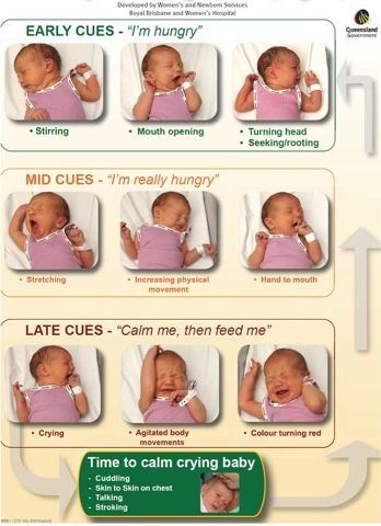 """""""Recognizing Infant Hunger Cues"""" - you need to calm them before feeding instead of feeding to calm to effectively feed (causes reflux, colic, etc.)"""