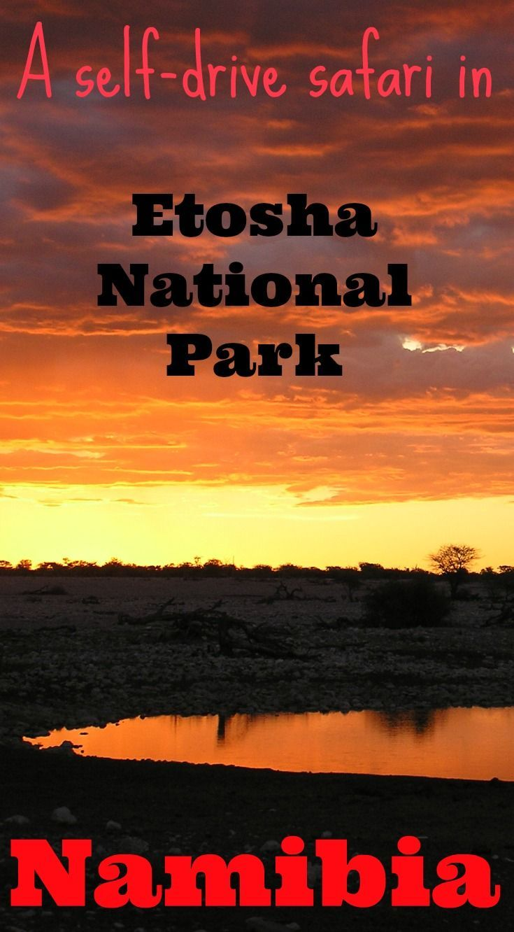 A self-drive safari in Etosha National Park Namibia is an affordable safari holiday with outstanding wildlife viewing opportunities and landscapes: http://www.worldwanderingkiwi.com/2012/06/namibia-safari-etosha-national-park/