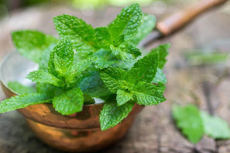 Você sofre desse mal? Então as espécies de plantas desta lista serão suas melhores amigas nas próximas noites de sono.