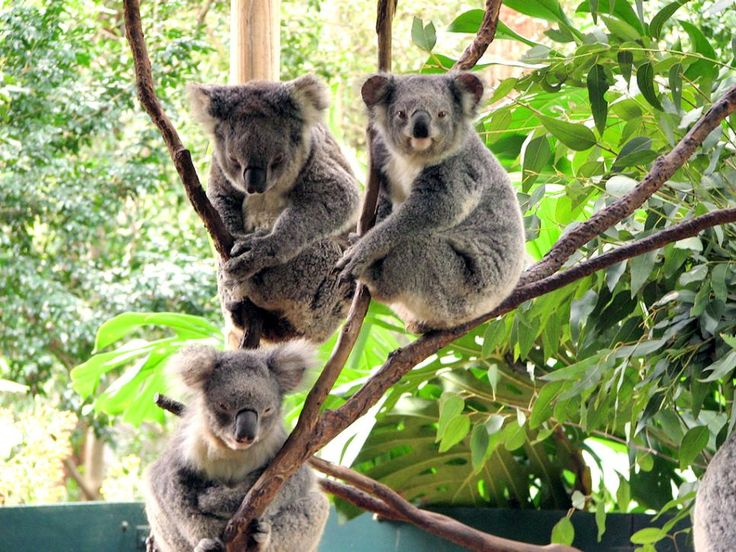The Koala Park Sanctuary, Hyde Park, Vanucluse House and Cronulla Beach are just a few must-see tourist attractions in Sydney.