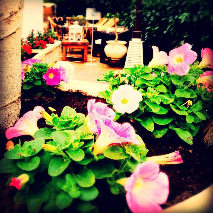 Spring colors in Armata Hotel Garden