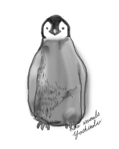 エンペラーペンギンの雛