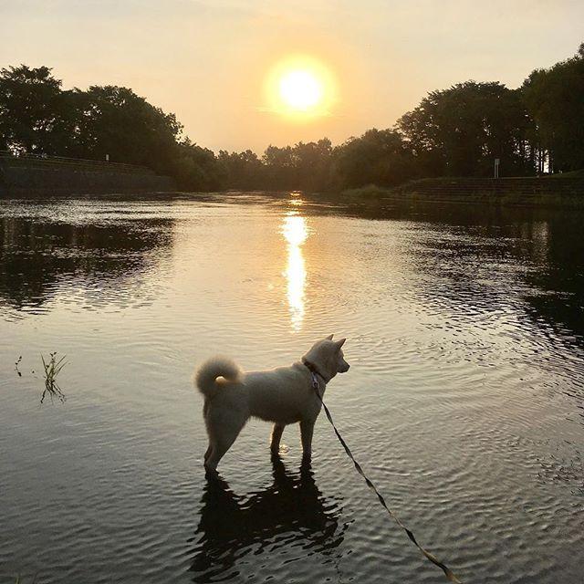 おはよん〜(^ェ^)〜 雨がパラパラ降っていると思ったら太陽さんが一瞬出て、また曇り空になったゎ〜 ハナは今日も朝から川で水遊び 川の近くに行くと走り出すから着いていけないわ〜 水遊びは楽しんだねぇ〜^ ^ #北海道犬 #日本犬 #アイヌ犬 #犬 #白犬 #わんこ #愛犬 #笑顔 #犬バカ部 #和犬 #天然記念物 #犬散歩 #涼しい #初秋 #アウトドア #保護犬シェルター #殺処分ゼロ #お散歩好き #hokkaidoken #hokkaidoinu #Japaneseken #Japanesedog #ainuken #ainudog #Whiteinu #Likes #outdoor