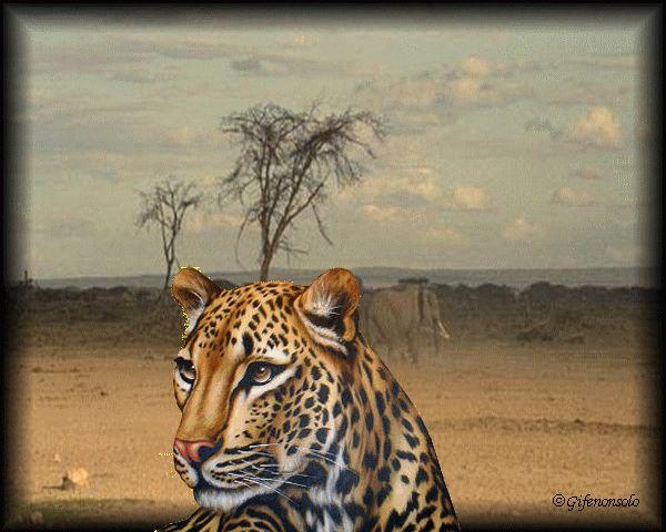 tigre occhi animati