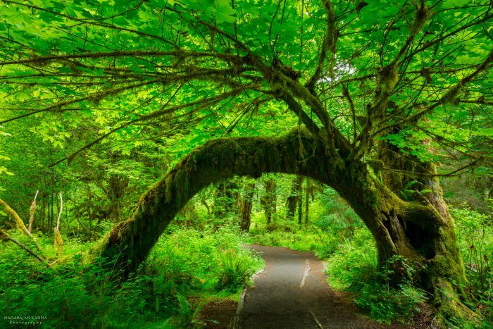 Places to visit - Hoh Rainforest in Washington state