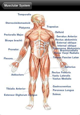 140 Best Mjs Anatomy Images On Pinterest Human Body Nursing