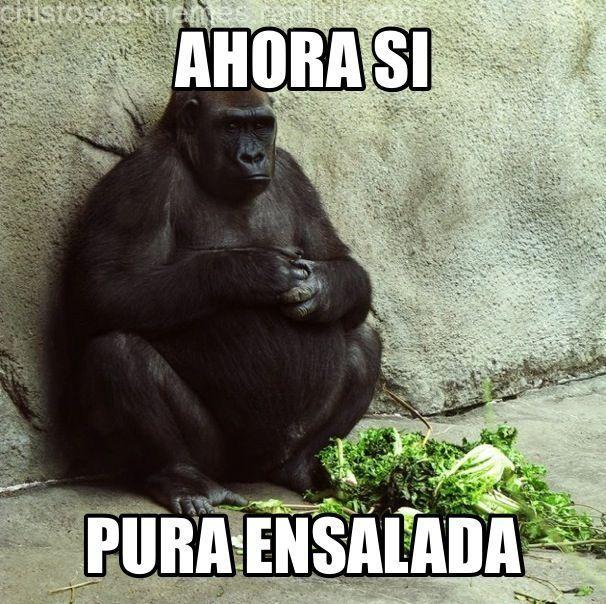 Most Funny Monkey Memes Fun Funny Monkey Memes Monkey Memes Monkeys Funny