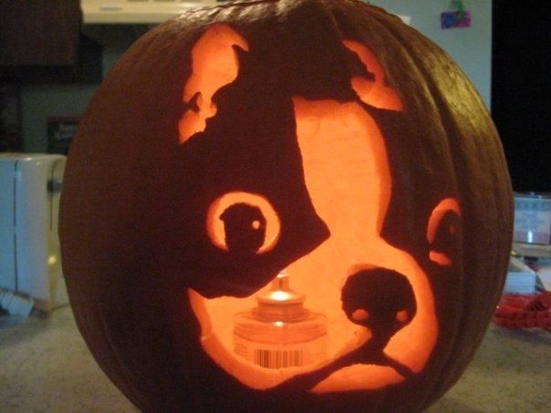 *Have you Ever Carved a Boston Terrier dog into an Halloween Pumpkin?*  Check Out these Pumpkins ► http://www.bterrier.com/?p=17573