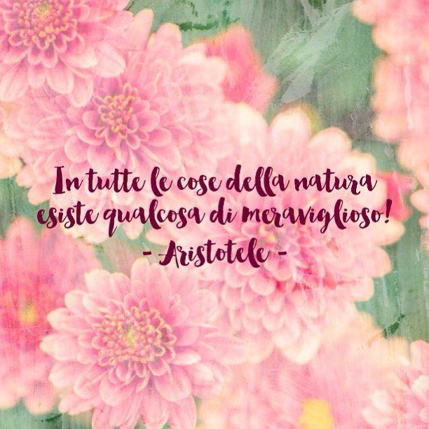 """""""In tutte le cose della Natura esiste qualcosa di meraviglioso!"""" - Aristotele -  #citazione #cit #quote #aristotele #natura"""