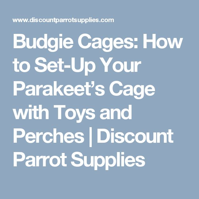 Budgie Cages: How to Set-Up Your Parakeet's Cage with Toys and Perches | Discount Parrot Supplies